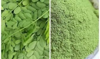 সুপার ফুডঃ মরিংগা পাউডার (Moringa Powder) বা সজিনা পাতা গুড়া